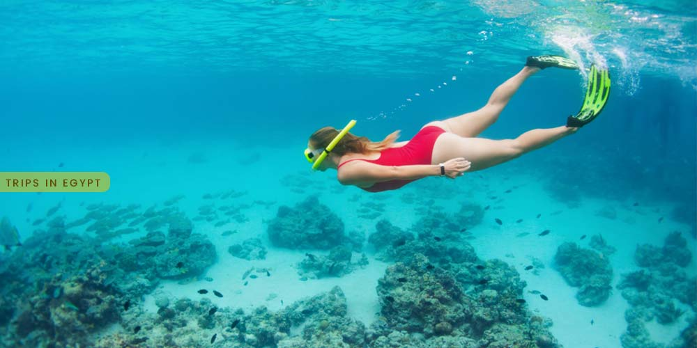 Snorkeling Tour in Safaga - Things to Do in Safaga - Trips in Egypt